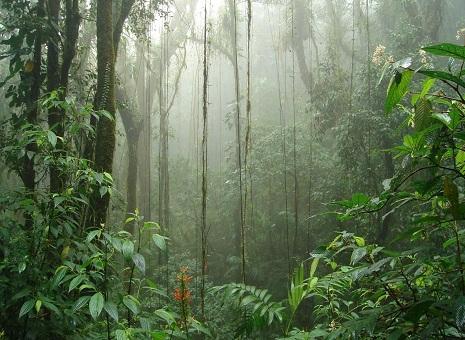 Caminata Reserva Biológica de Monteverde