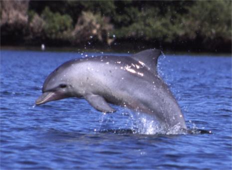 Tour de los delfines y Jozani Forest
